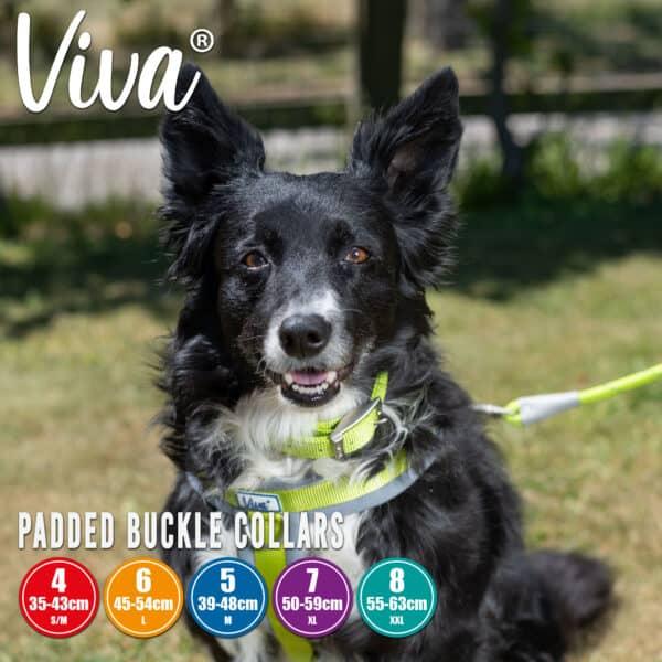 Viva Padded Collar